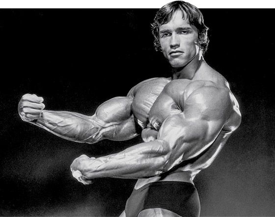 Arnold schwarzeneggers blueprint to cut training arnold arnold schwarzeneggers blueprint to cut training malvernweather Image collections
