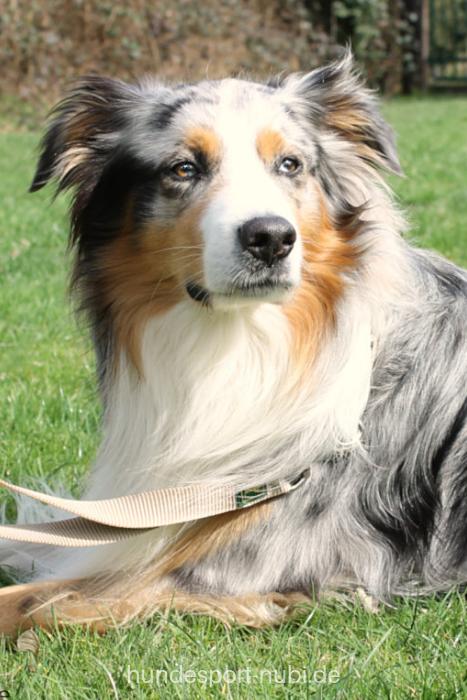 Pin auf Hunderassen Wissenswertes über Hunde aller Rassen
