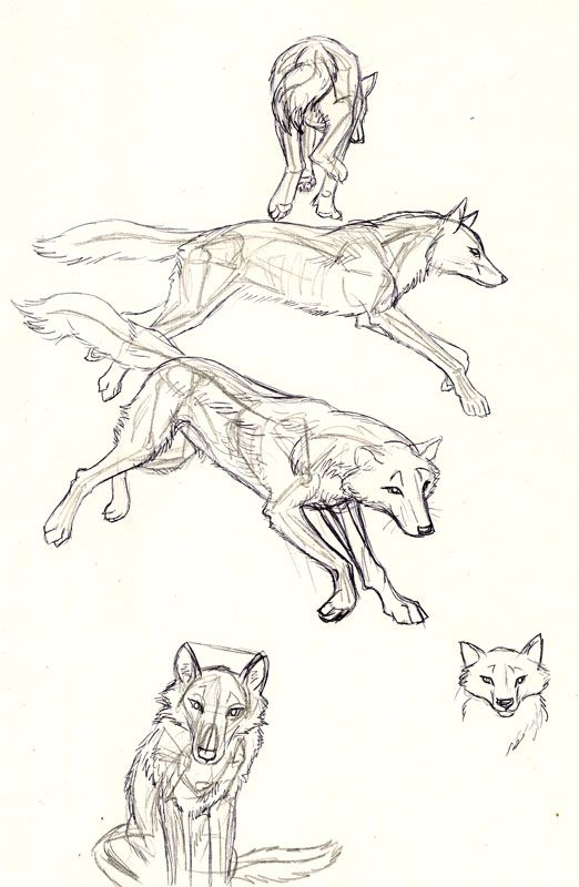 Wolf Anatomy By Kekpafrany On Deviantart 3 Wolf Anatomy Draw