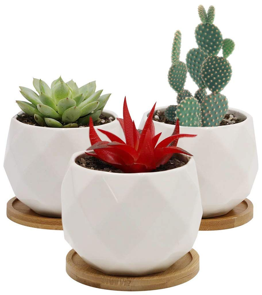 White Ceramic Succulent Planter Pot Modern Cute Small Cactus Herb Flower Planters With Bamboo Tray Ceramic Succulent Planter Ceramic Succulent Flower Planters