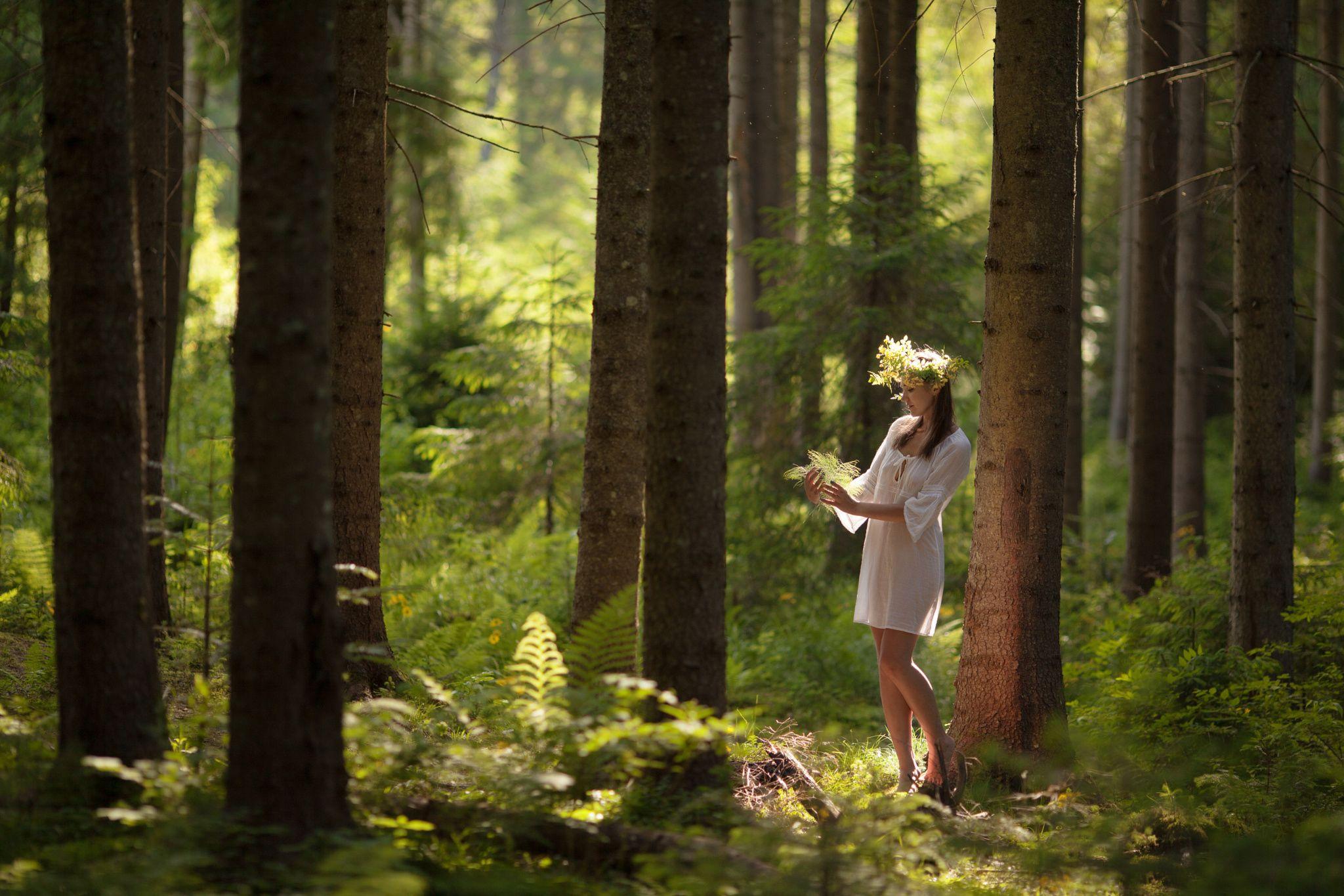 Лес в картинках для женщин