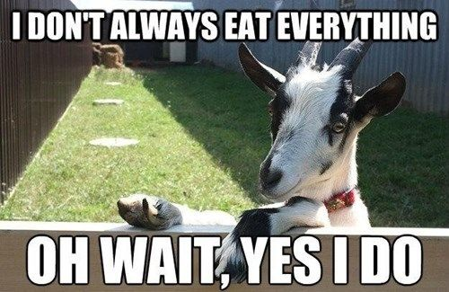 The Most Interesting Goat In The World I Don T Always Eat Everything Oh Wait Yes I Do D Goats Funny Funny Goat Memes Goat Quote