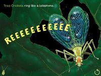 This interactive app is based on the best-selling book of the same name, written and illustrated by a bug expert and published by a company dedicated to encouraging kids to appreciate nature. Children will see and hear insects as they actually move their bodies to make sounds – all kinds of sounds.   Read more: http://www.smartappsforkids.com/2013/10/featured-free-and-discounted-apps-october-29th-.html#ixzz2joKWGIwx