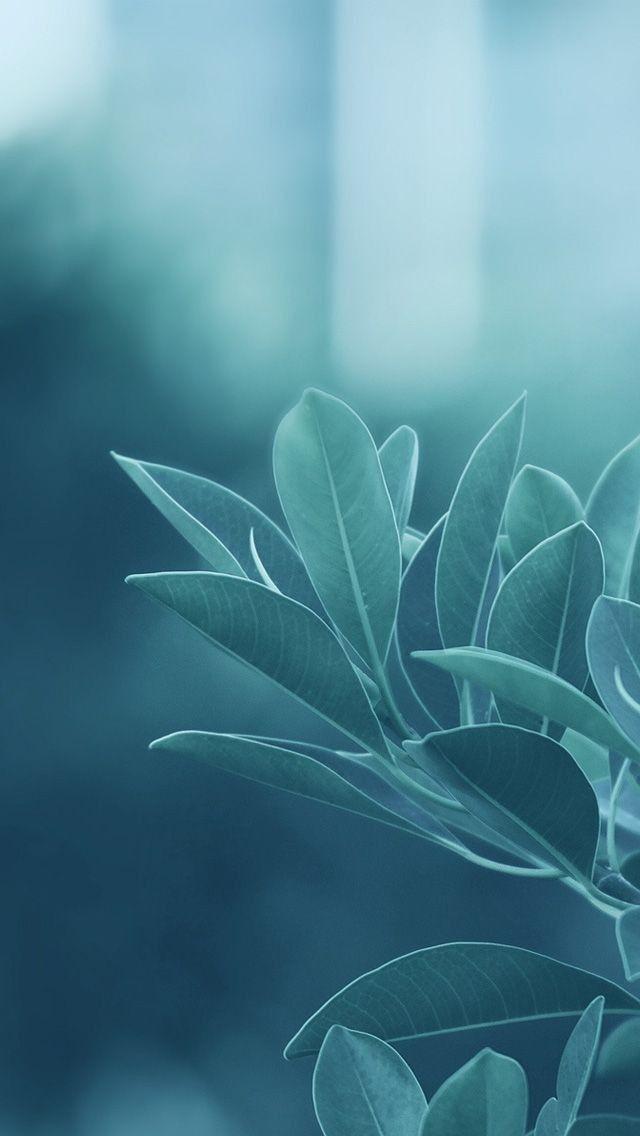 Pin by Genesis Golez on Aesthetic Leaves wallpaper