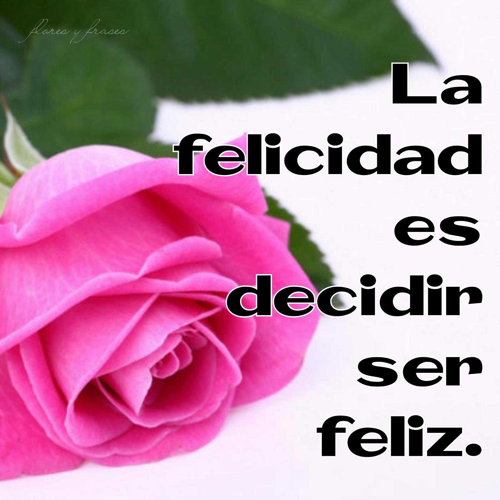 Imagenes De Flores Rosas Margaritas Claveles Y Mas