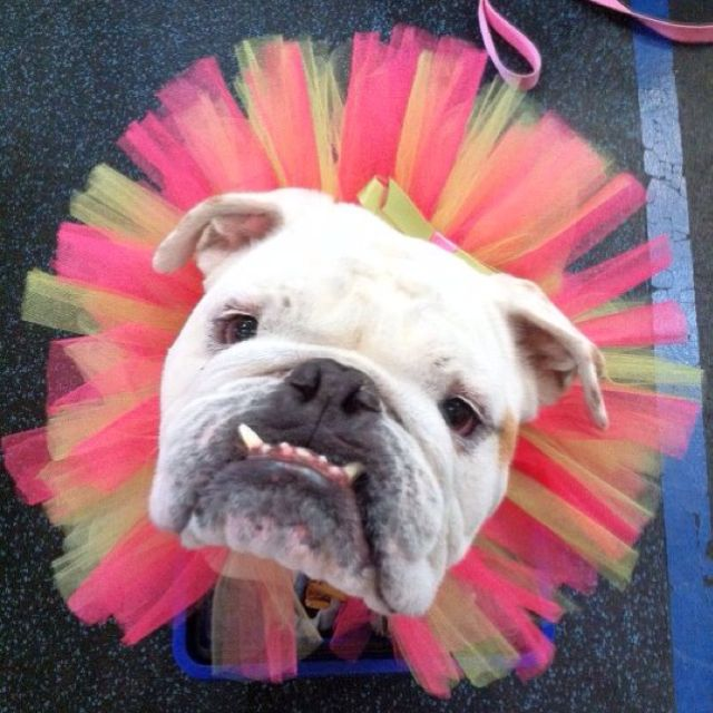 Binxie Pet Boutique tutu at The Whole Dog Market in Atlanta