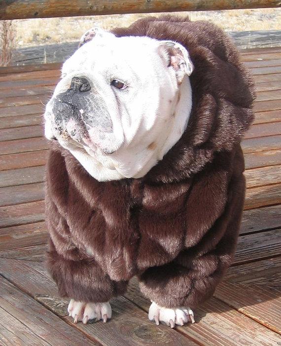 Order English Bulldog Faux Mink Fur Coat Bulldog Custom Pattern