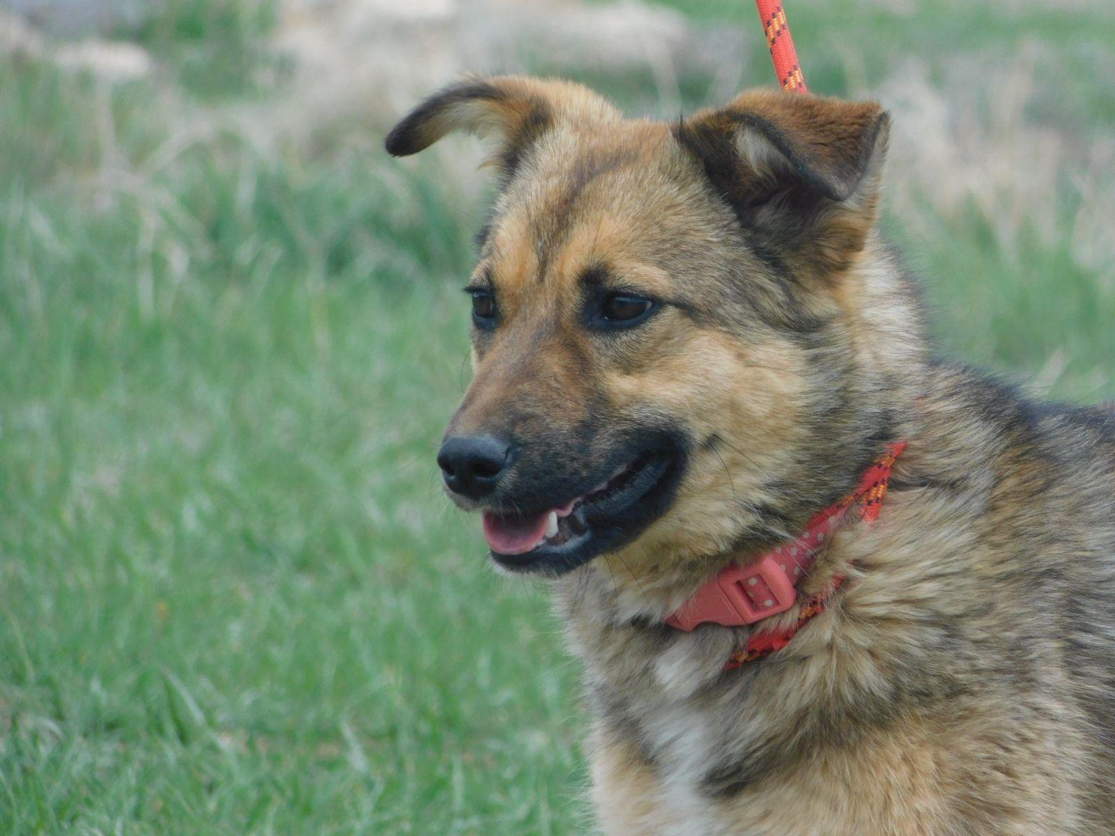 Adopt Daisy On Dogs Humane Society Pets