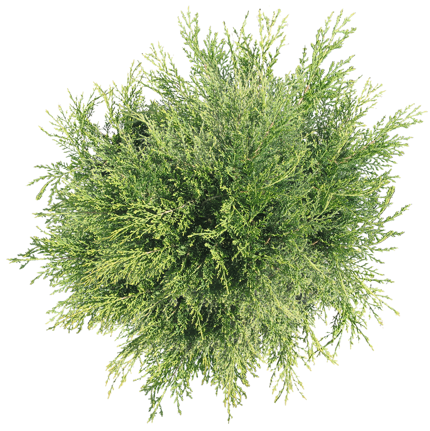 Transparent Tree Top View Png Images Trees Top View Top View Tree Plan Png