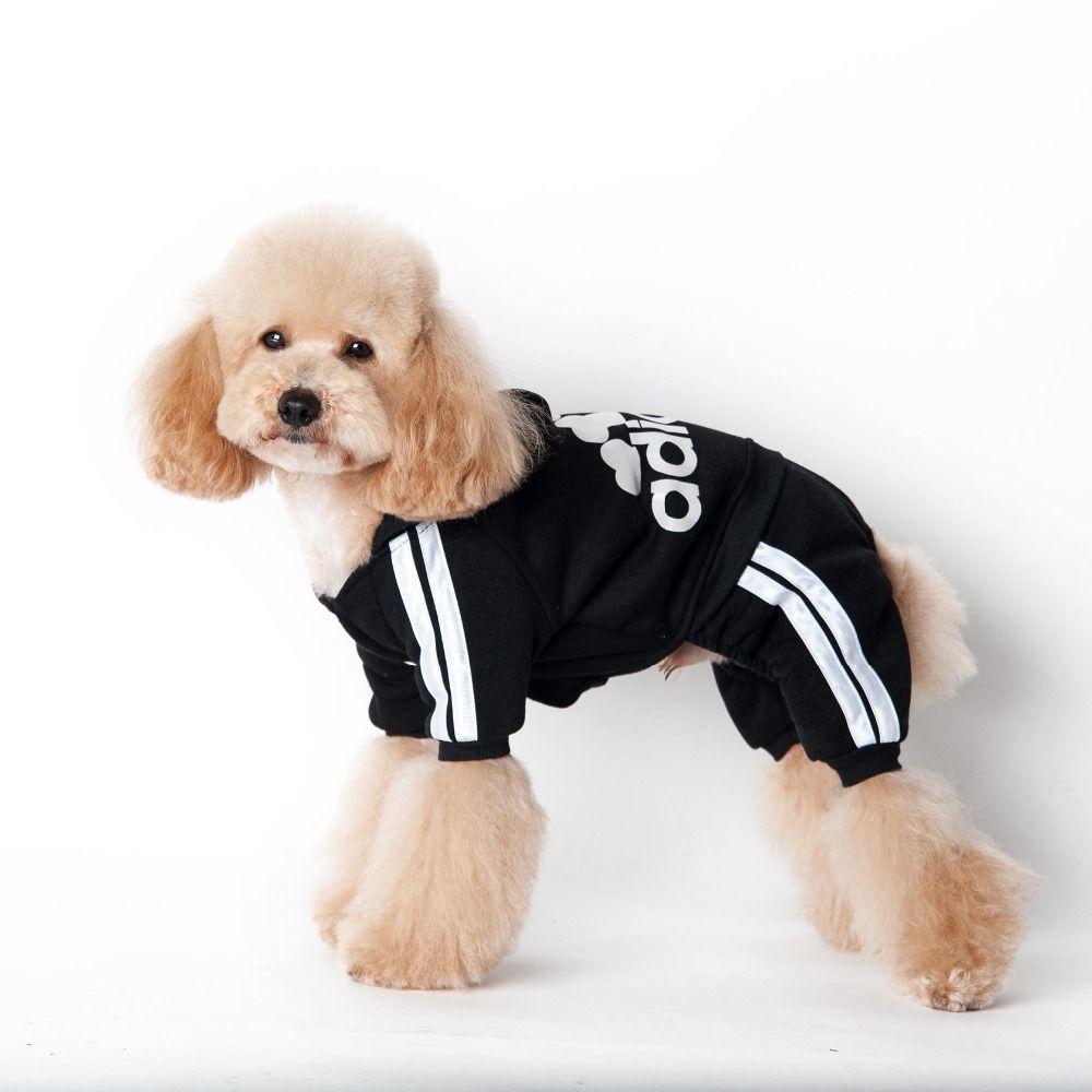 billig hund