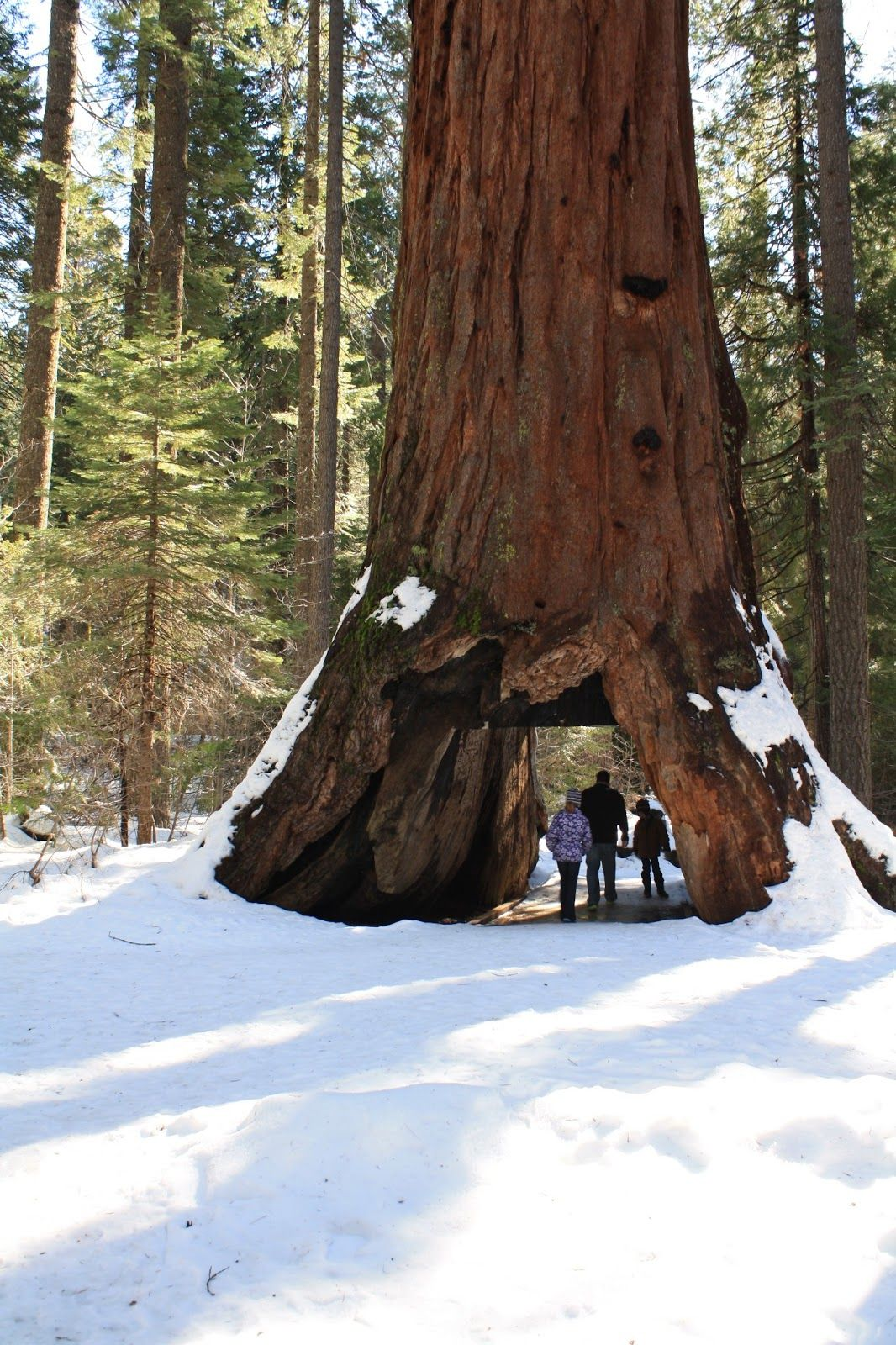 Best 25 Angels Camp California Ideas On Pinterest Hiking Areas Near Me Weekend Hiking And