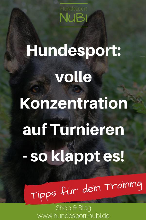 Volle Konzentration Das Kann Dein Hund Lernen Begleithund Training Hundetraining Hundeplatz Hundeschule Tipps Und Tricks Spo Hundesport Hunde Welpen