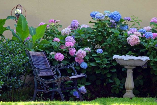 Kletterpflanzen Hortensien blau rosa Farbe gemütliche Sitzecke
