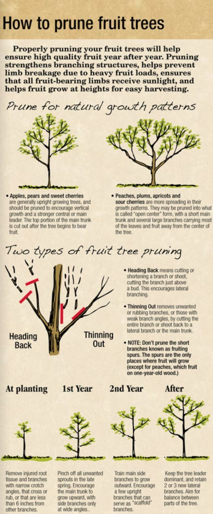 How to prune your fruit trees infographic! Pruning your trees can increase their fruit production as well. #FruitTrees #GrowingFruitTrees