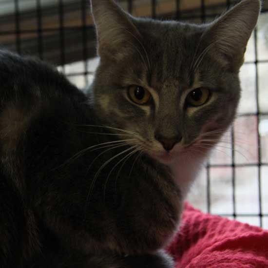 Adopt A Pet Animals Cat Adoption Adoption