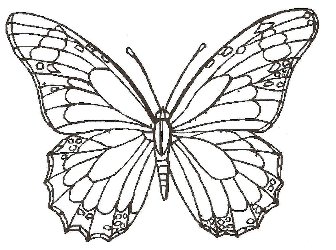 8 Butterfly Coloring Page Download