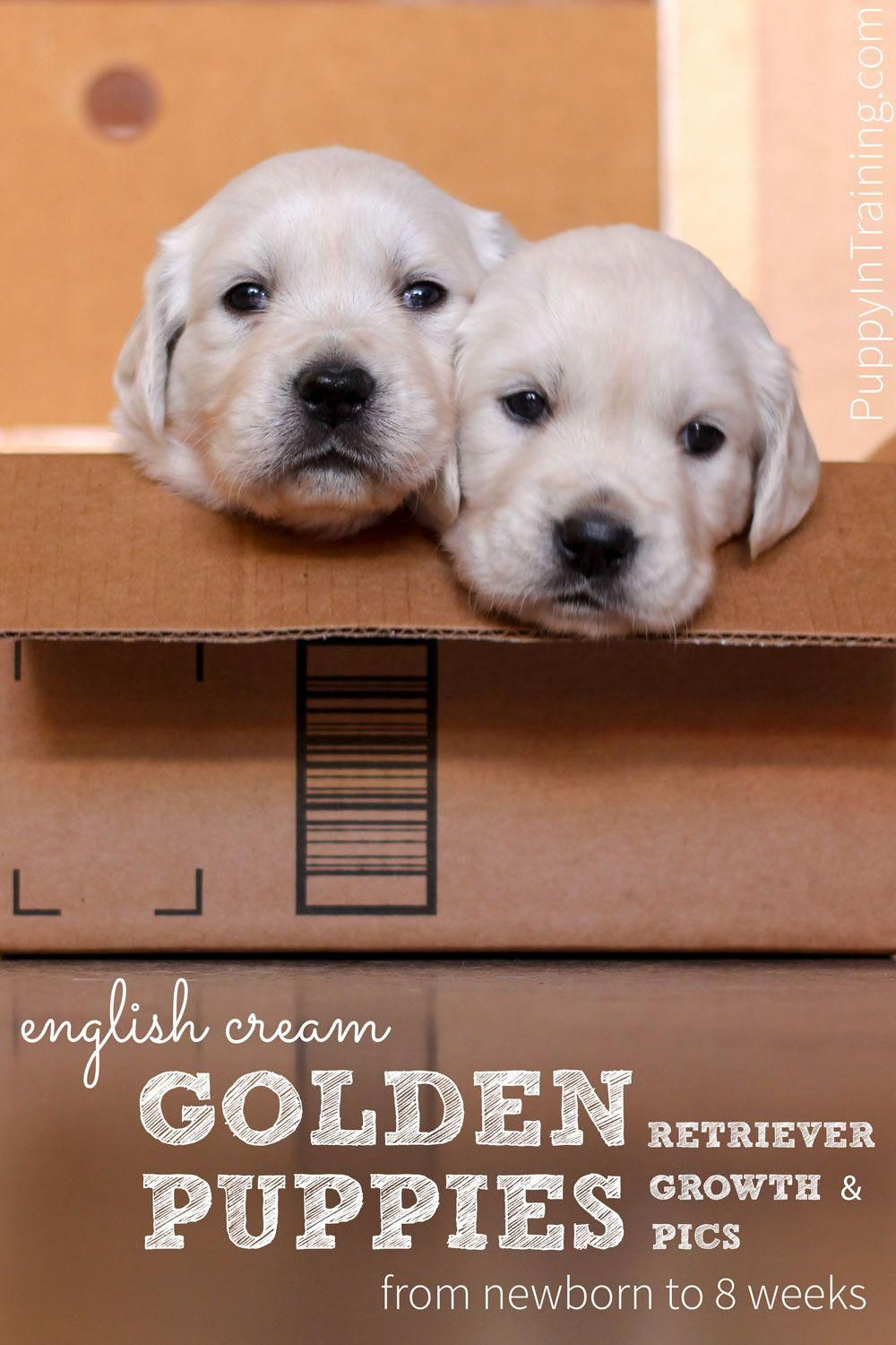 Check Out These Adorable Pics And Development Stages Of English