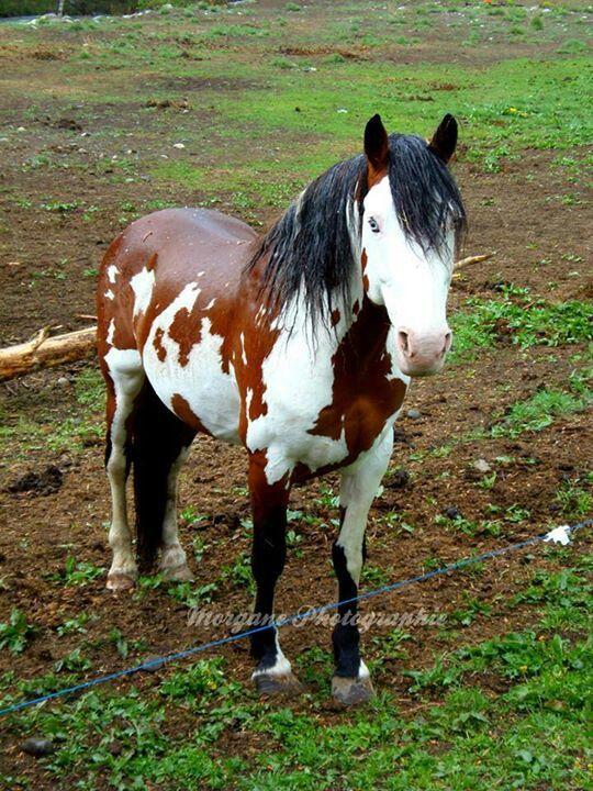 Horses coat is so shiny you wonder if it is real! Blue eyed beauty horse.