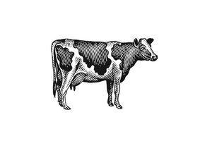 Milk Cow Woodcut