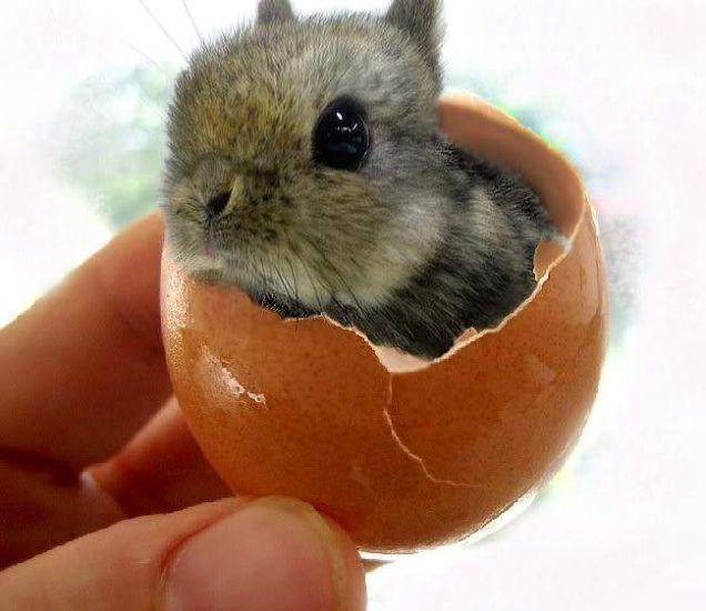 dit is een piepklein konijntje in een kippen eierschaal