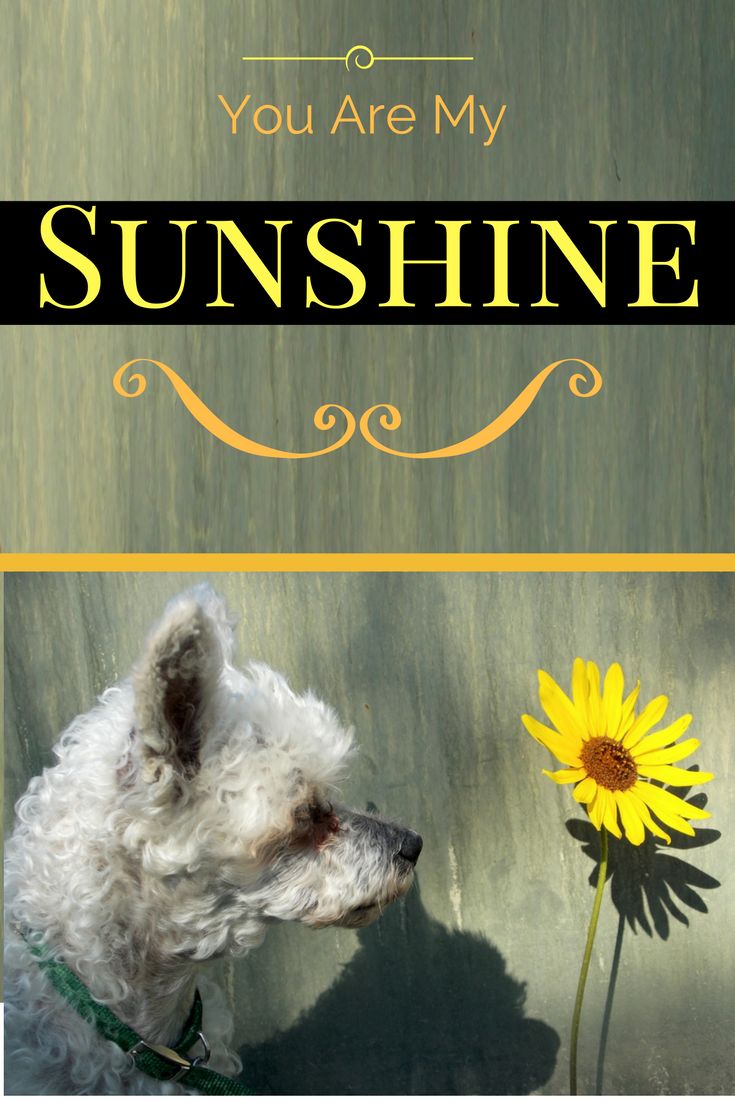 You are my sunshine cute dog and sunflower greeting card we all