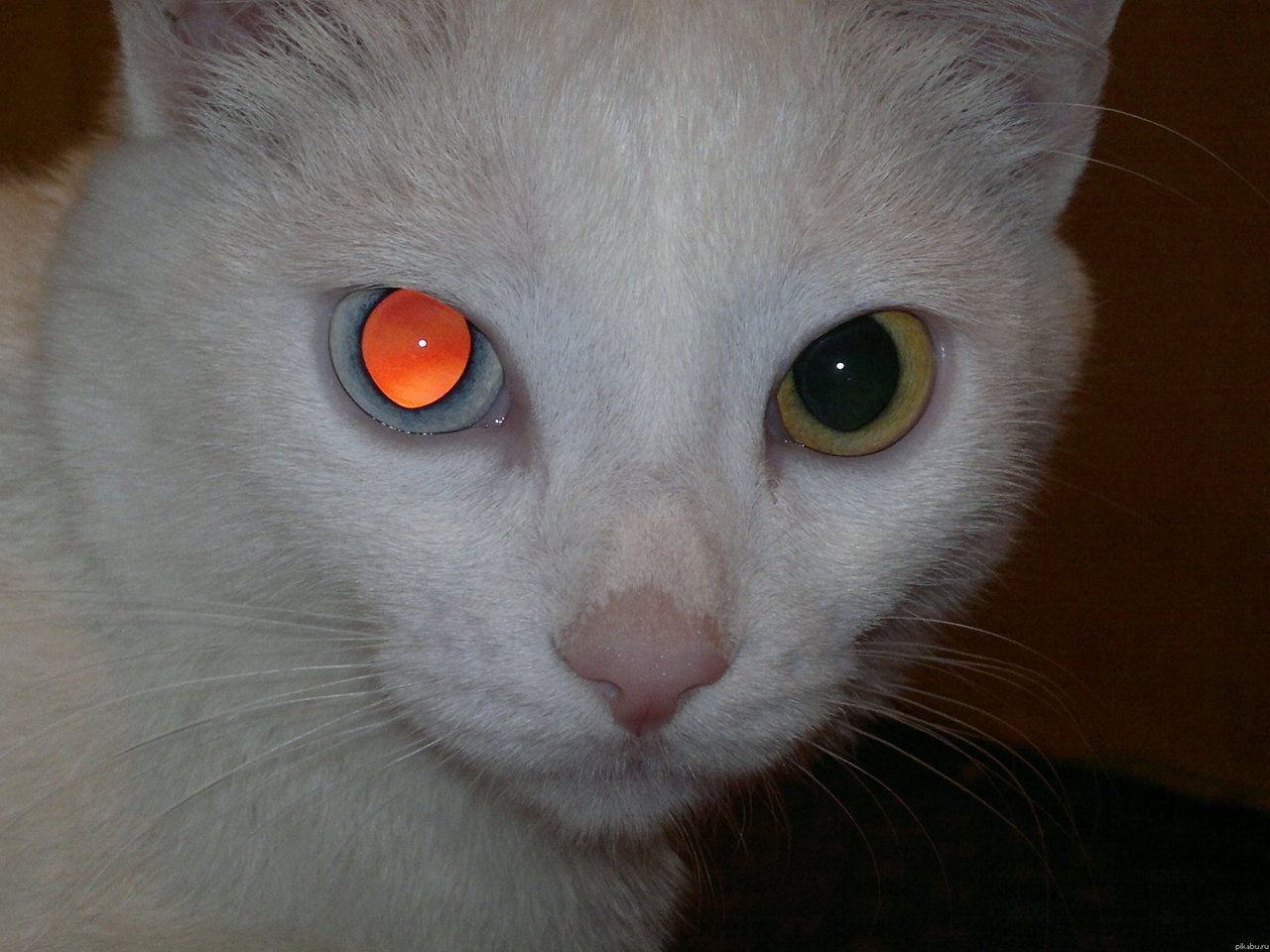 Pin by Au on animals in 2020 (With images) Cat aesthetic