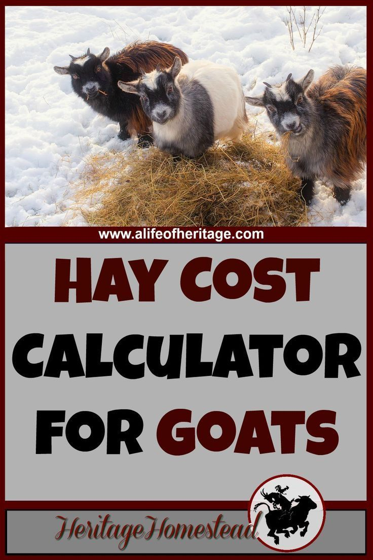Hay Cost Calculator for Goats How Much Hay Do I Need