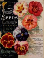 Vaughan's seeds illustrated