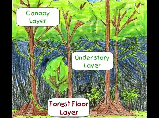 Rainforest Classroom Forest Floor And Understory On Vimeo