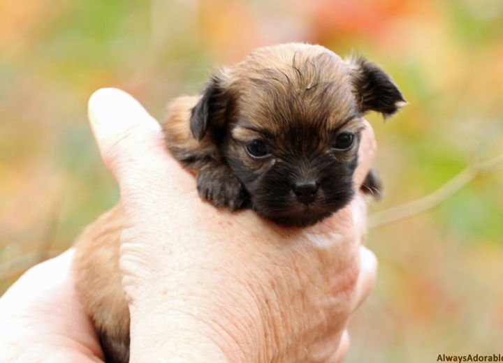 August 2016 puppies from puppies puppy nursery cute