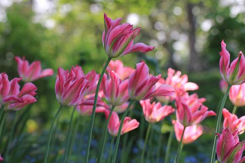 Imagen de flowers, pink, and beautiful