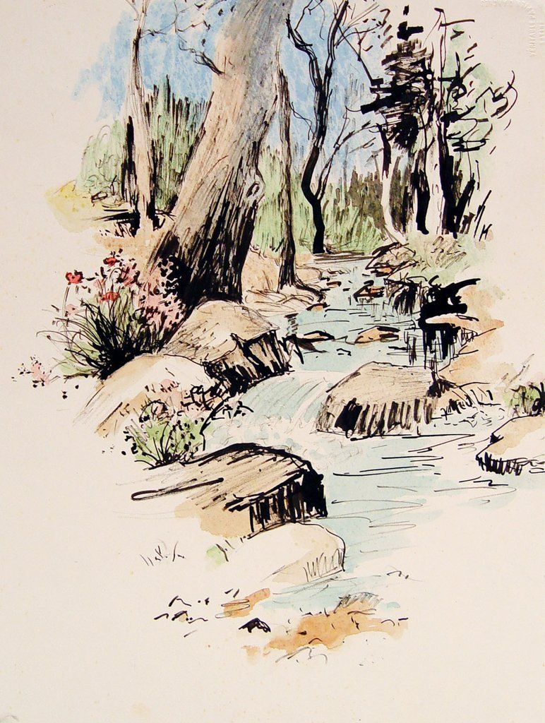 Forest Stream Study