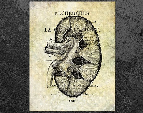 KIDNEY ANATOMY PRINT Medical Art Nephrology Decor Anatomy Poster Vintage Book Page Anatomical Illustration Clinic Wall Doctor Office This Is