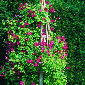 make your own garden obelisk selbstgemachtes und g rten. Black Bedroom Furniture Sets. Home Design Ideas