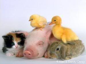 awww!  gotta love babies of any species