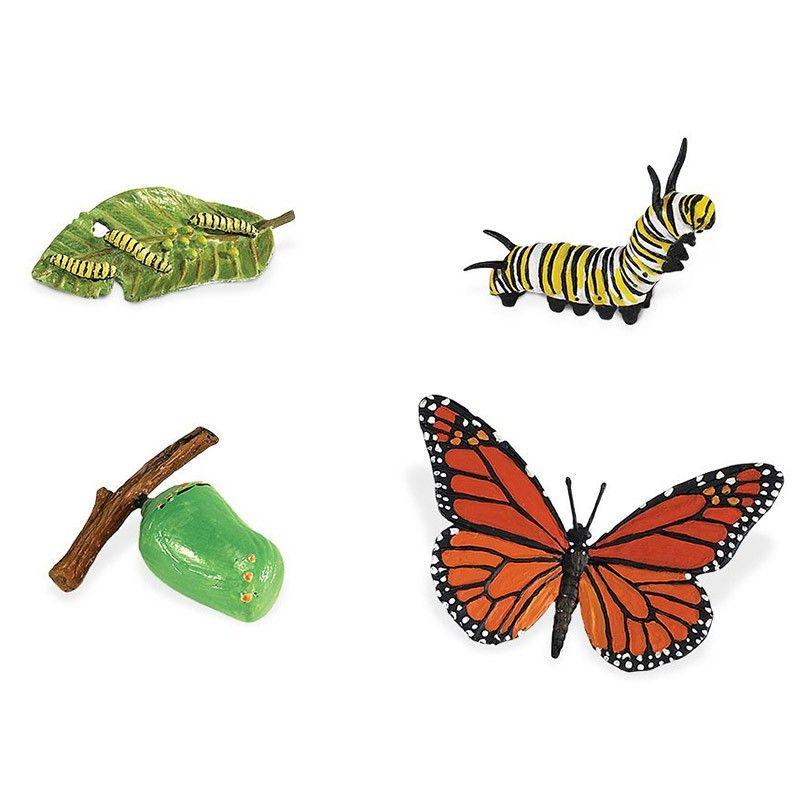 Ciclo De Vida De Una Mariposa Safari Ciclo De Vida De La Mariposa Ciclos De Vida Mariposa Monarca