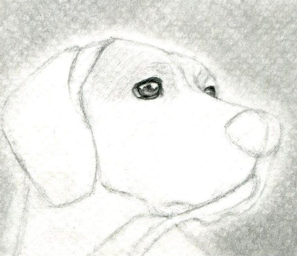 Como Aprender A Dibujar Animales Domesticos A Lapiz 5 Como Aprender A Dibujar Aprender A Dibujar Como Dibujar A Spiderman