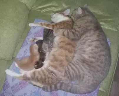 Семейная идиллия… #кот #котэ