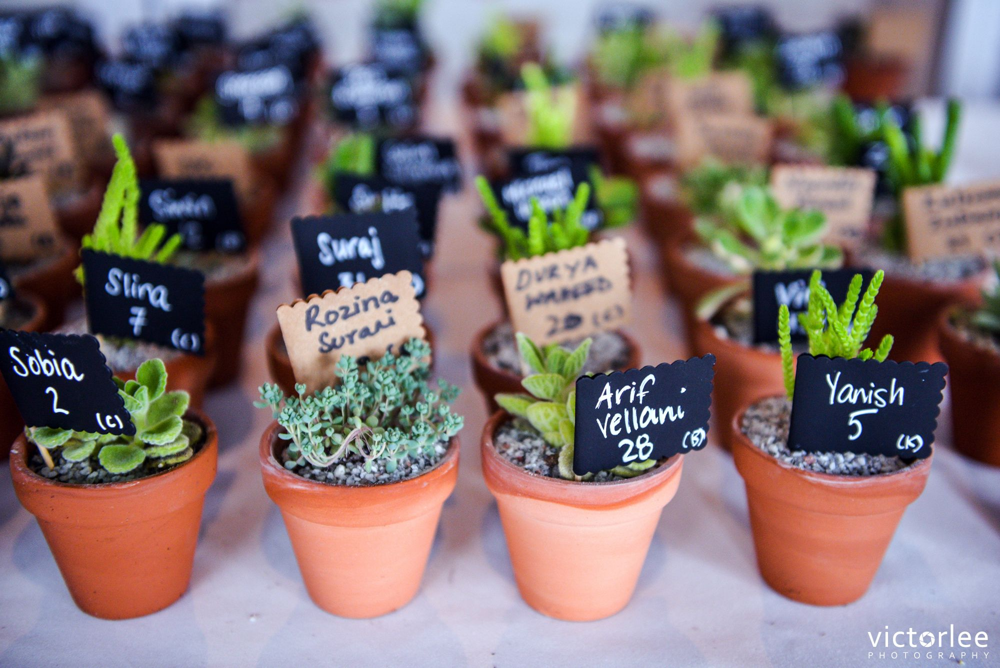 Succulent Wedding Favour Inspo! Succulent wedding