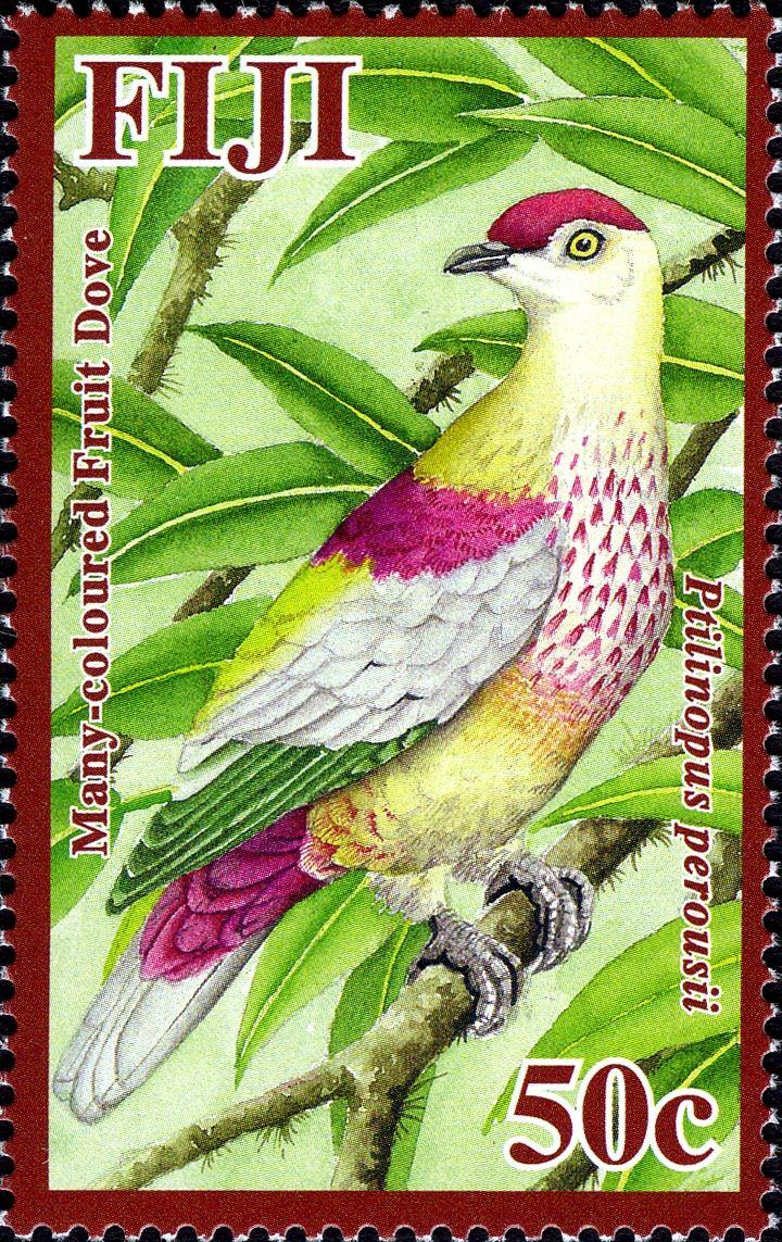 coloured Fruit-dove - Google Search