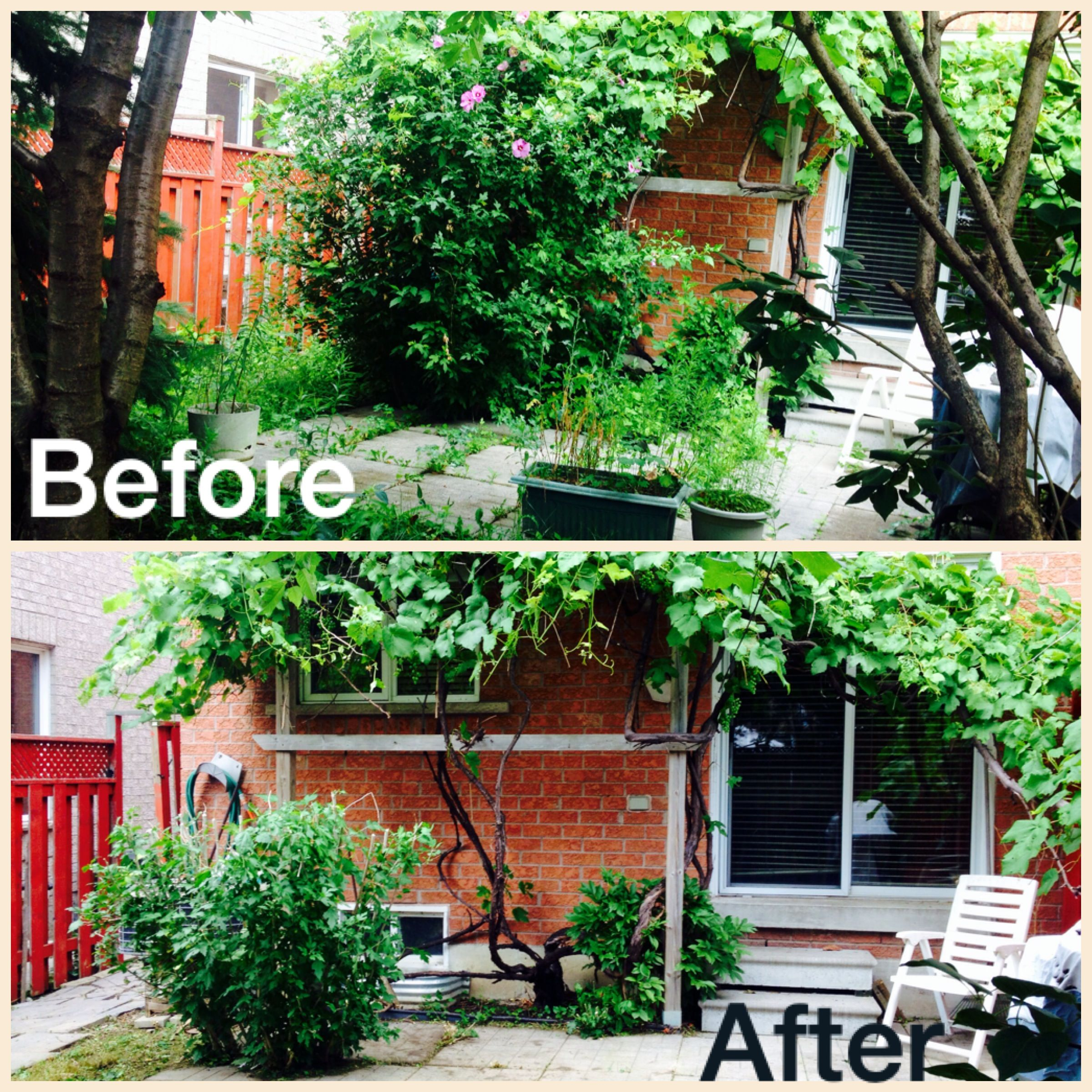 Before And After Some Major Yard Clean Up Landscape Backyard