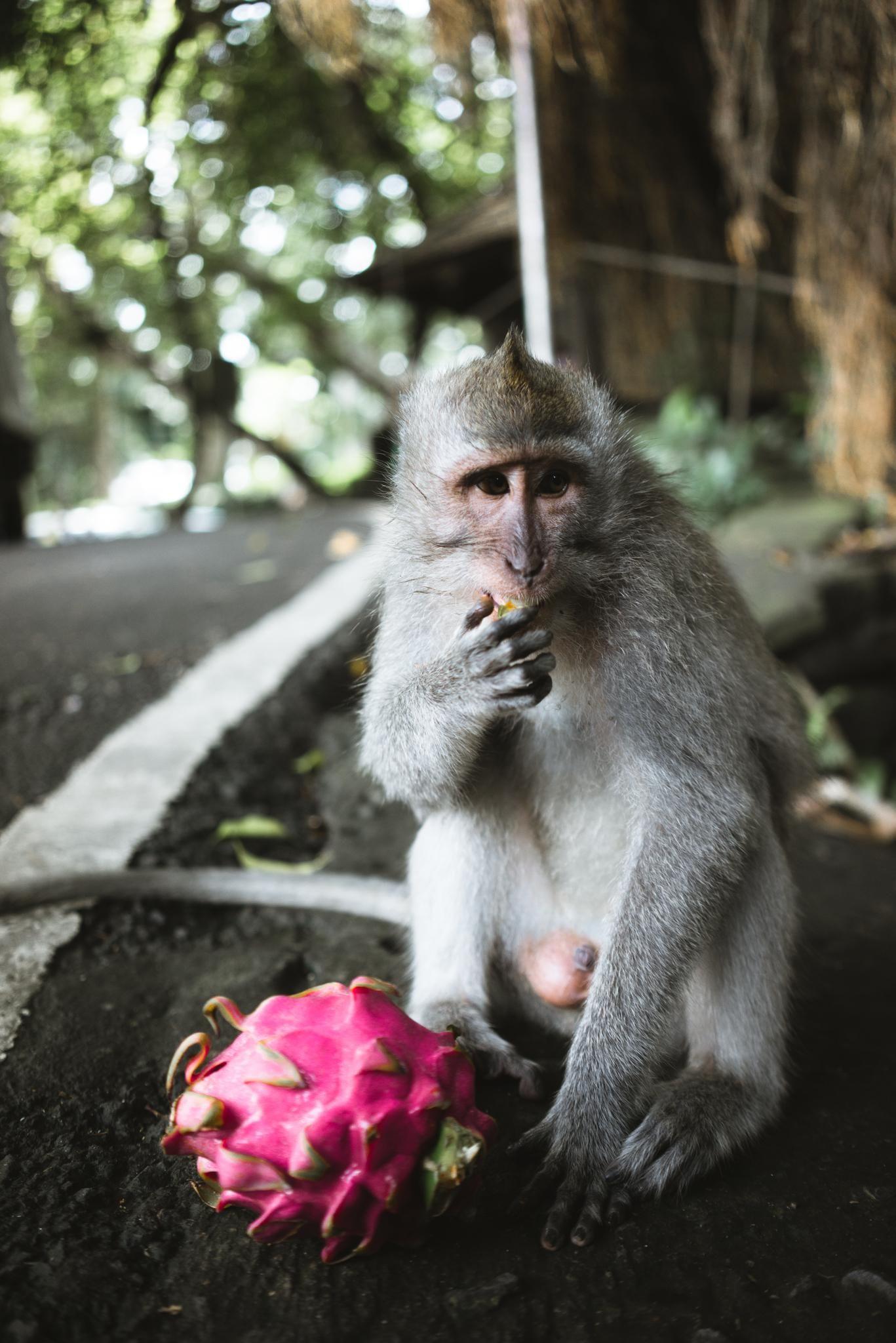ITAP of a monkey enjoying his dragon fruit http://ift.tt/2htq7jr