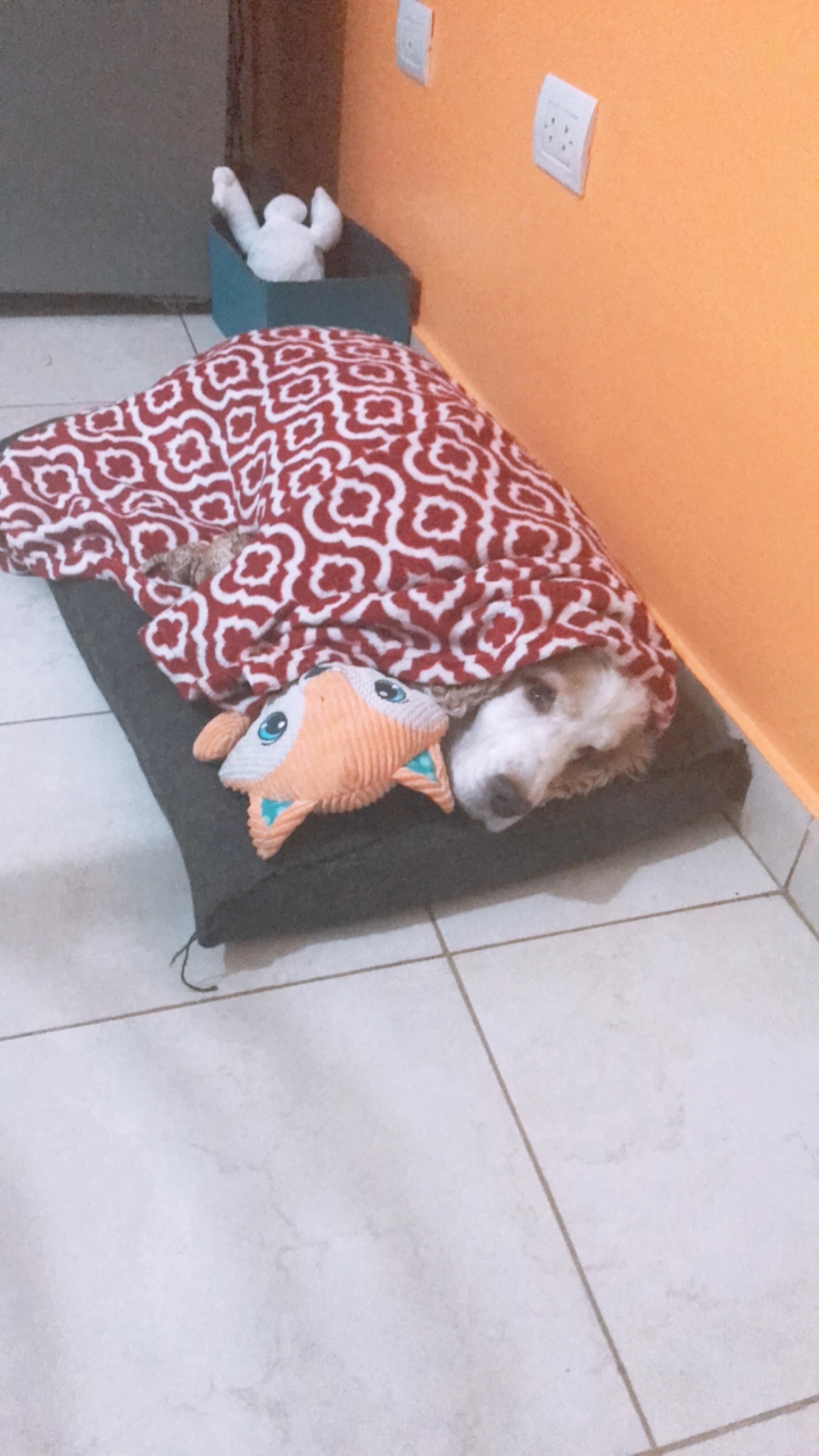 He cant sleep unless we tuck him in bed and give him his