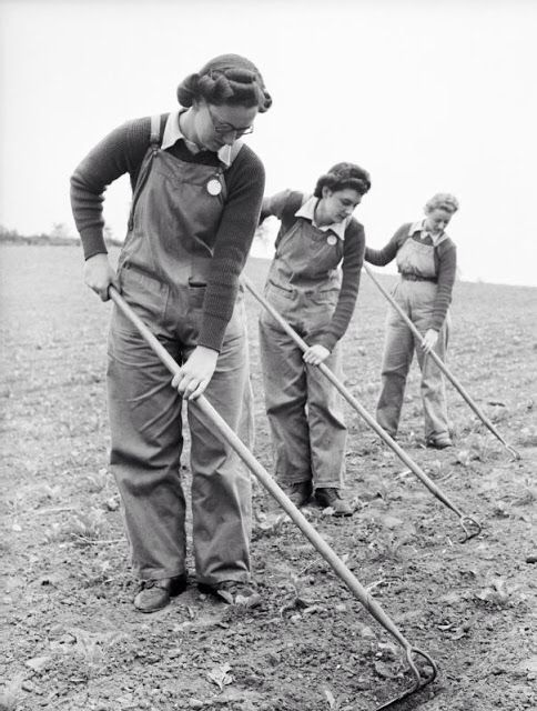 Three Land Girls work with hoes in a field as part of their training at the Northampton Institute of Agriculture.