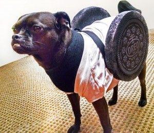 Howl O Ween 10 Homemade Halloween Dog Costume Ideas For Beginners