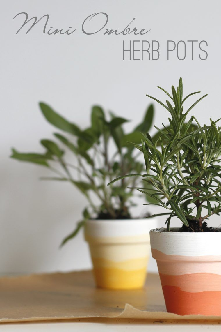 Mini Ombre Herb Pots is part of Herb pots, Plant pot diy, Clay pot crafts, Painted pots diy, Painted plant pots, Plant pot design - Create mini ombre herb pots that are a great way to motivate anyone to make a home fresh dinner! All you need are some mini clay pots, paint, and herbs