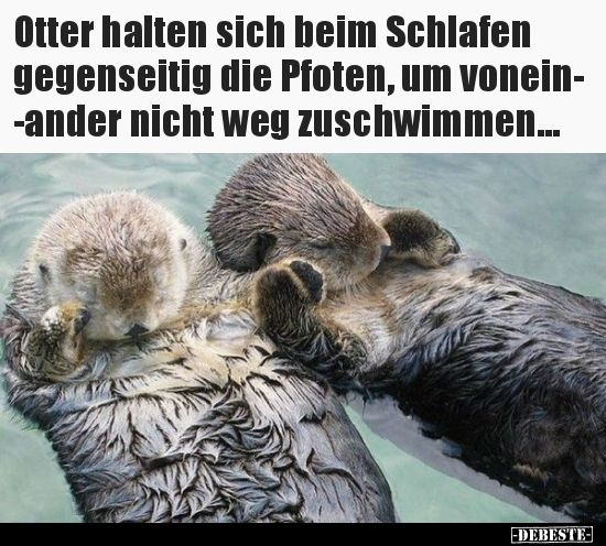 Photo of Otters hold each other's paws while sleeping to ..