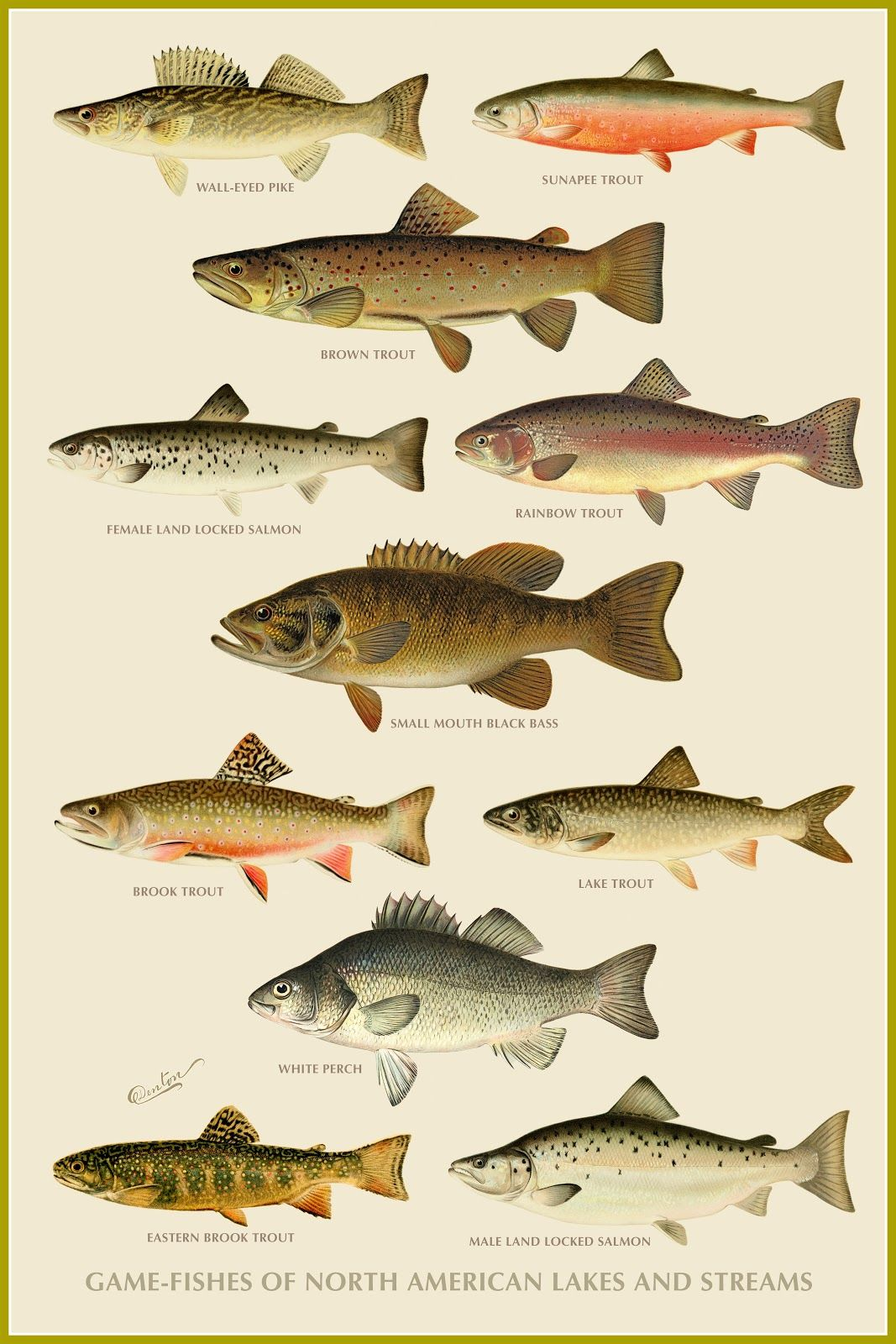 Game Fishes of North American Lakes and Streams | Free Printables ...