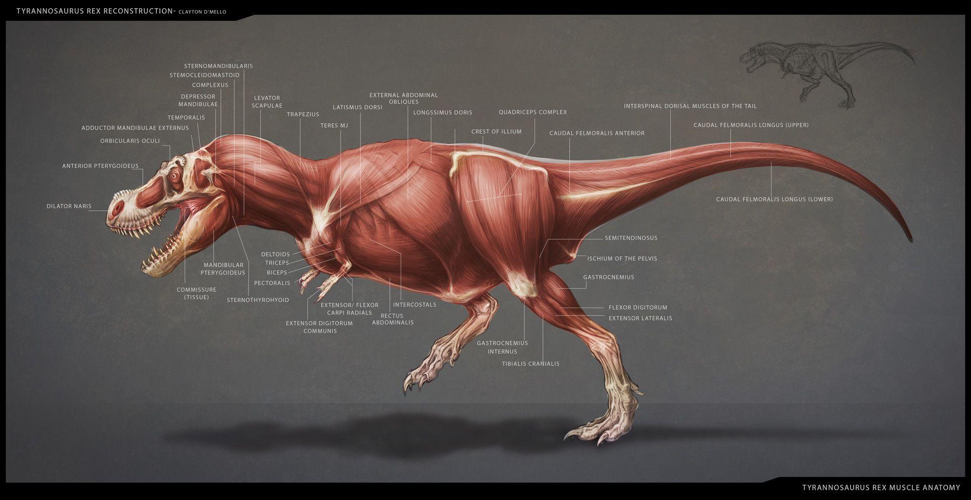 malvorlagen dinosaurier t rex vk  aiquruguay