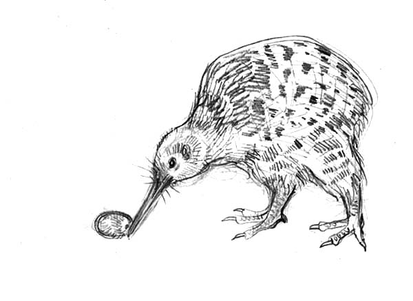 Kiwi Bird Lay Egg Coloring Pages Download Print Online Coloring Pages For Free Color Nimbus Egg Coloring Page Coloring Eggs Coloring Pages
